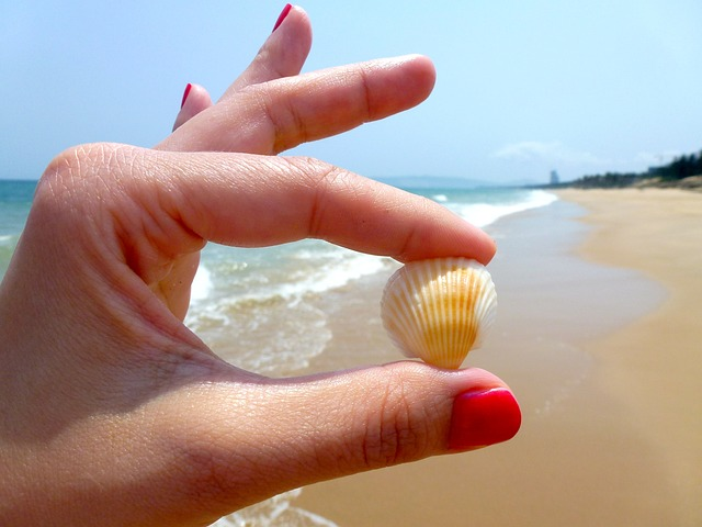 Comb Winter Beaches for Stunning Stones, Shells And More!